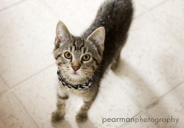 Porter Cat